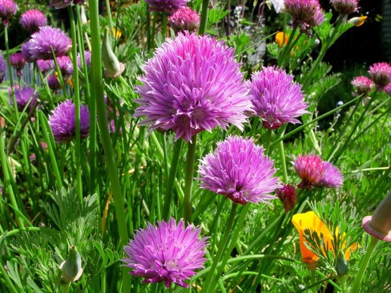 Zagorje - Sajam cvijeća iz bakina vrta